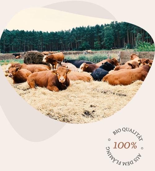 Bio Rinder auf der Weide in Klinkenmühle Brandenburg